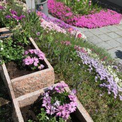 Piha & puutarha